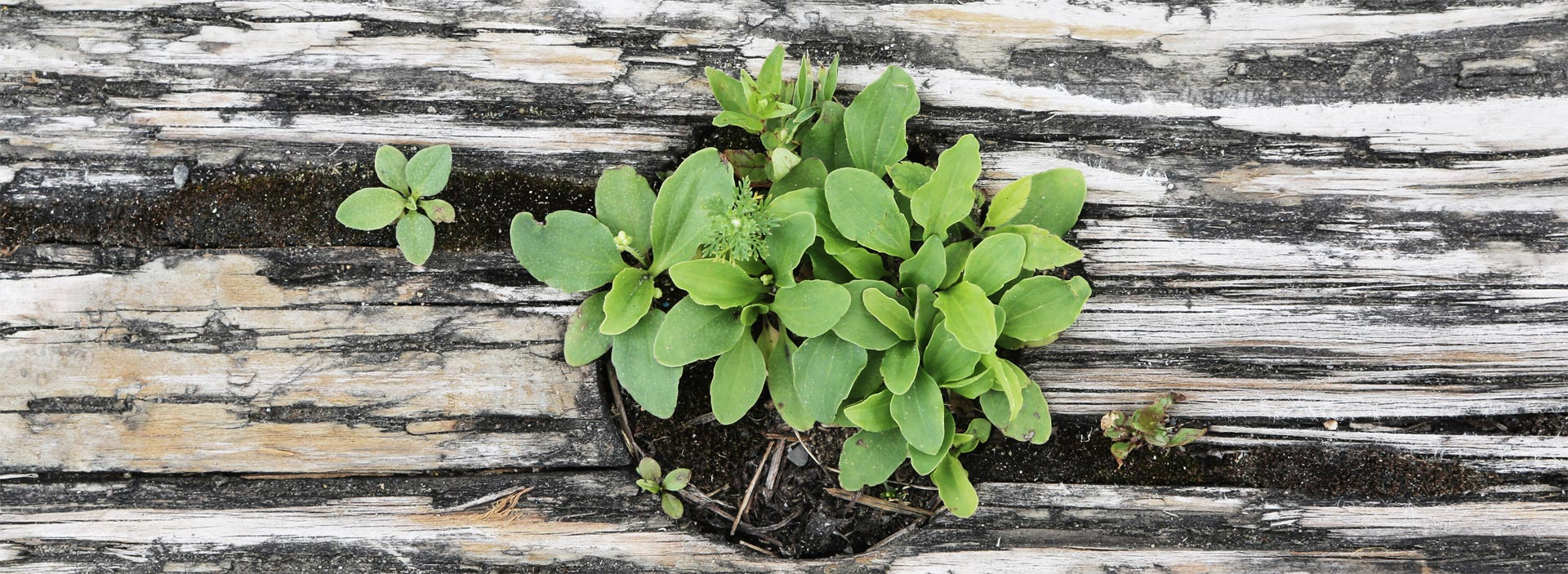 Green plant through tree