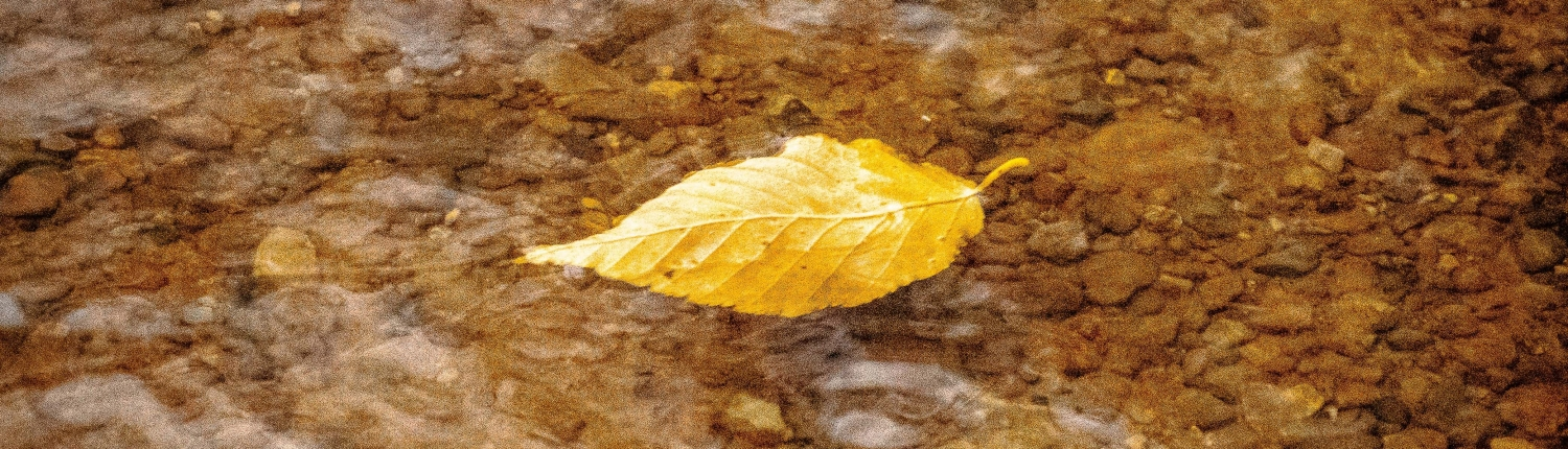 Single floating leaf